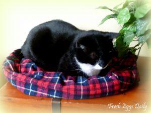 Tvoja mačka to bude milovať – pohodlná posteľ zo starých košieľ